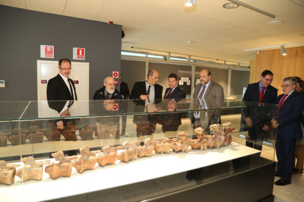 inauguracin-de-la-tercera-fase-del-museo-de-paleontologa_38715097445_o